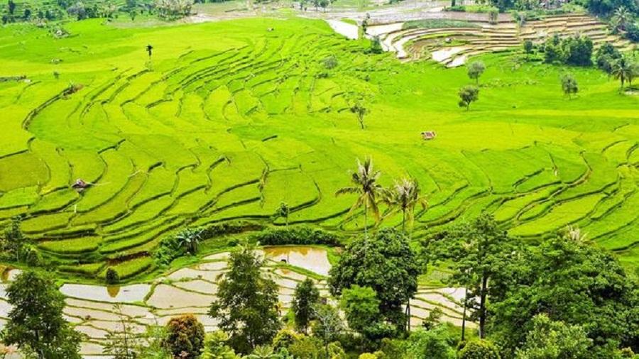 Desa Wisata, Potensi Baru Pariwisata Bali
