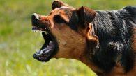 Sebanyak 8 Warga Kabupaten Pangkep Digigit Anjing Gila