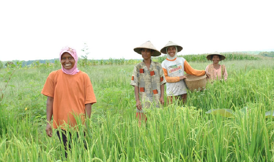 Inilah Lima Aplikasi Mobile dari Keminfo untuk Para Petani Kreatif