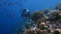 MSDC Unhas Adakan Pemantauan Terumbu Karang di Pulau Kapoposang
